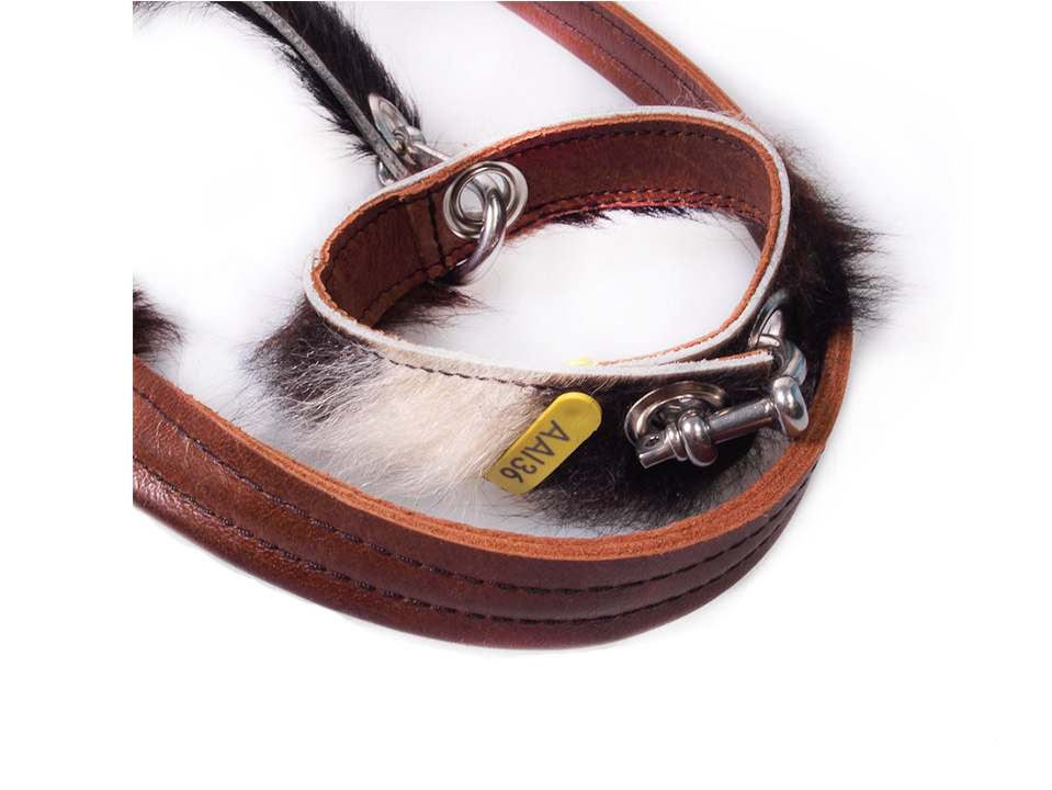 Halsband Aai35 S